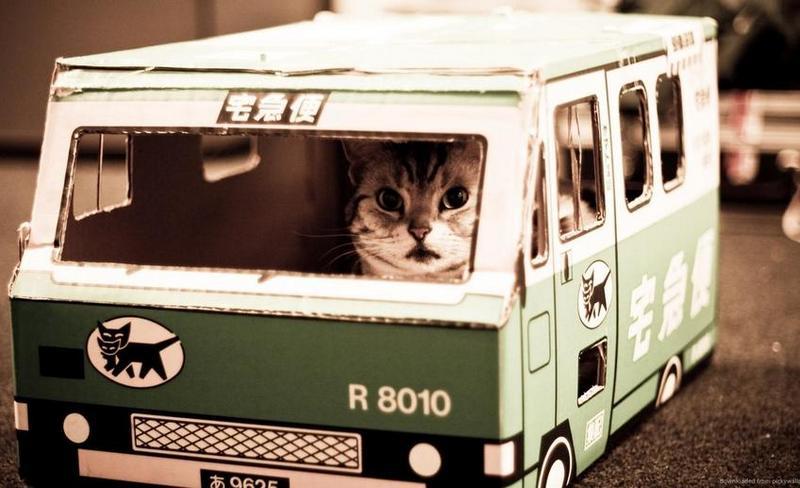 домик для кошки из картона ввиде машины
