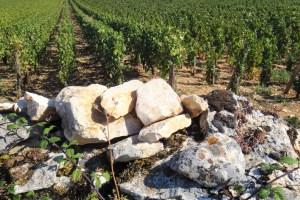 Terroir-テロワールワイン
