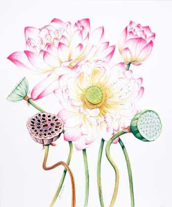 цветок лотоса
