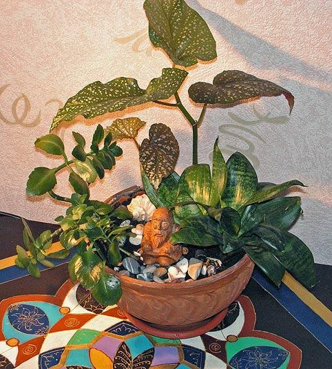 мини-сад в плошке своими руками