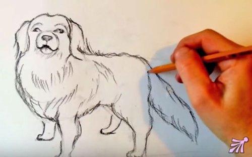 как научиться рисовать собаку карандашом