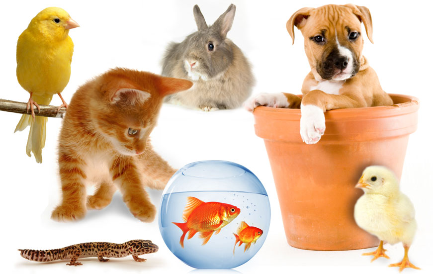 Less Common Allergies: Environmental & Pet | AllergicChild