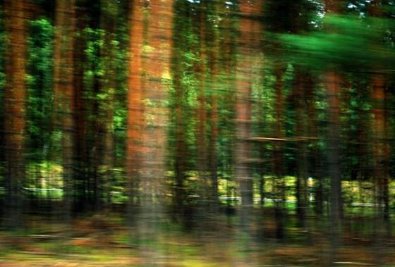 4 Waldwelt
