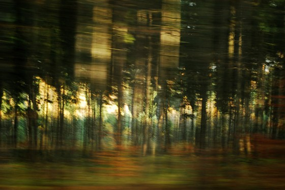 7 Waldwelt