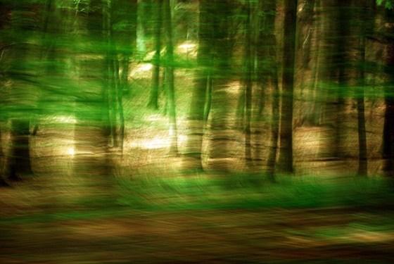 8 Waldwelt