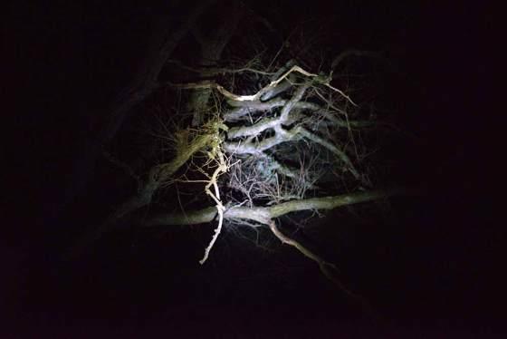 """aus """"Nachtraum"""" © Thilo Seibt"""