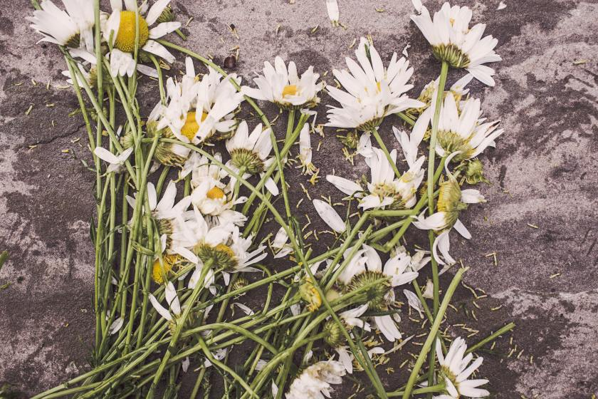 Scattered Cut Flowers