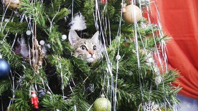 cat proofing your christmas tree how to keep - How To Keep Cat Away From Christmas Tree