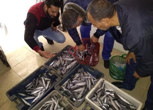 ضبط أسماك مغشوشة في غزة