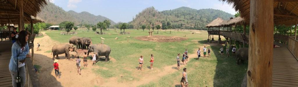 Throwback Thursday – Elephant Nature Park