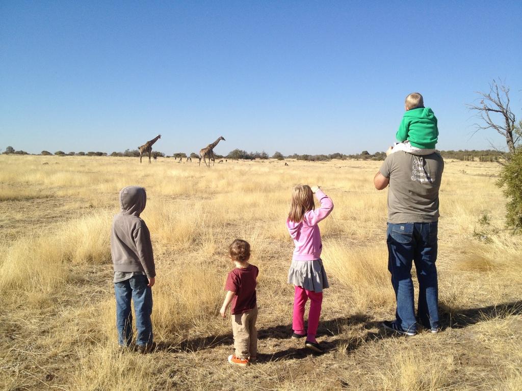 Jurassic Park Giraffes