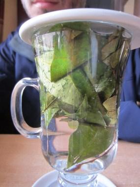 Fresh coca tea.