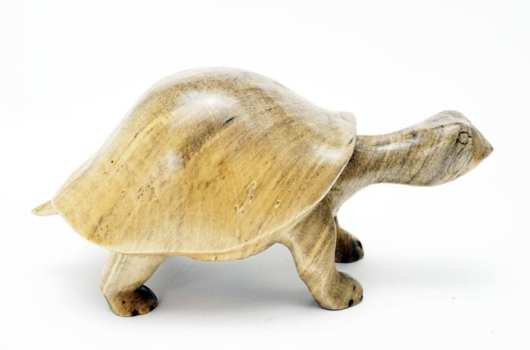 Robbie Craig Buckeye Wood Turtle