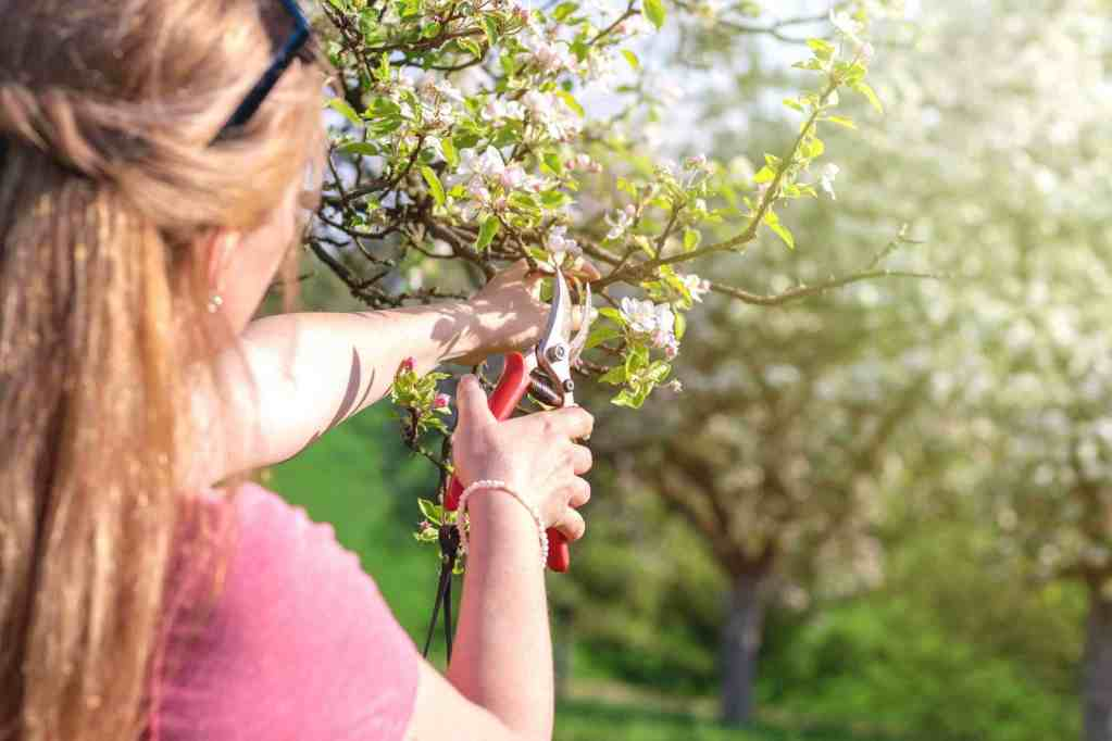 9 best pruning shears for home and garden use