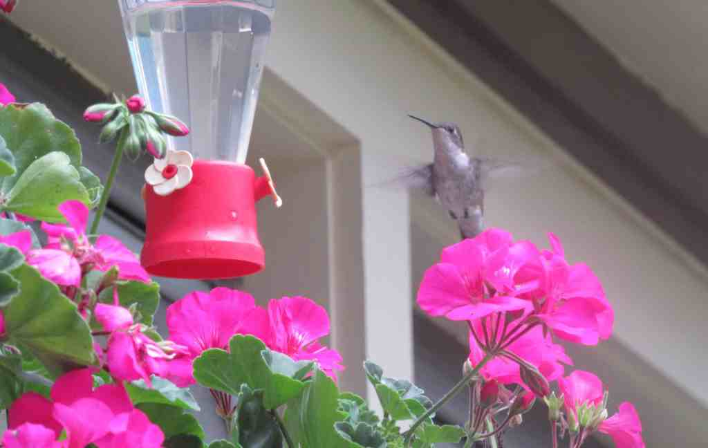 The Best Hummingbird Feeders for Your Porch, Yard and Garden
