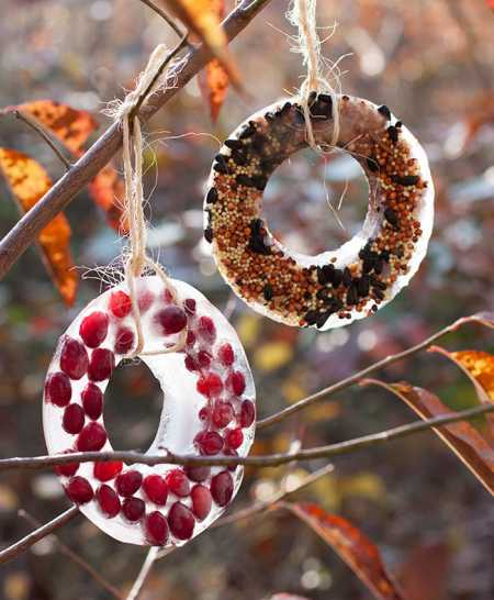 Bird Seed Ice Ornaments Home And Garden