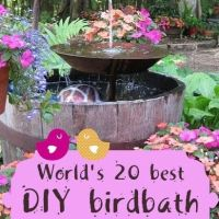 World's 20 Best DIY Birdbath Ideas