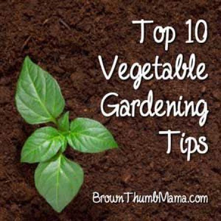 veggiegarden