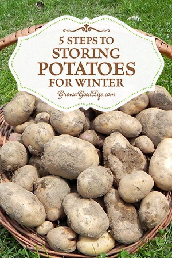 storingpotatoes