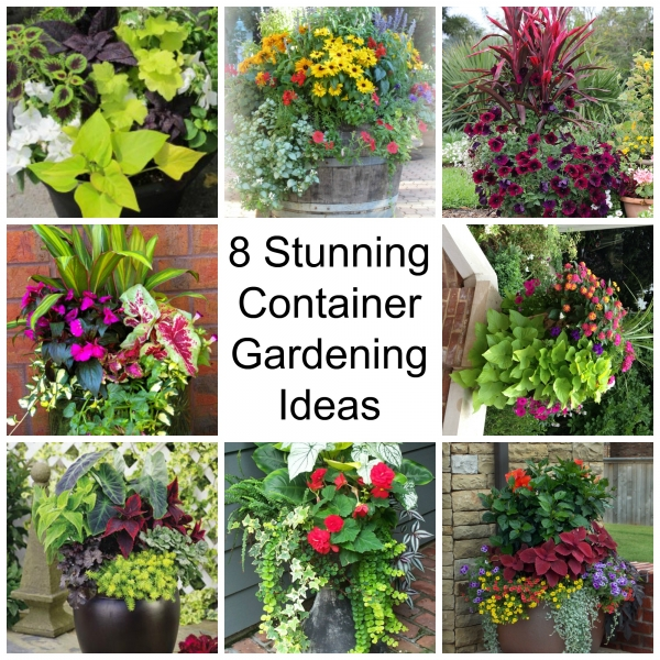 Container Garden Ideas: 8 Stunning Container Gardening Ideas