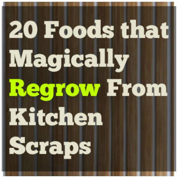 Food That Magically Regrows Itself From Kitchen Scraps: Did You Know These Foods Can Actually Regrow Themselves