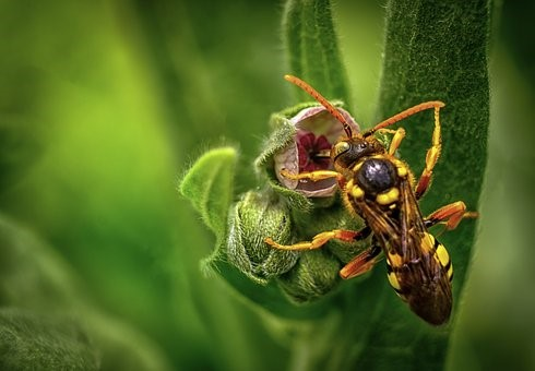 DIY Gardening – How To Keep Wasps Away