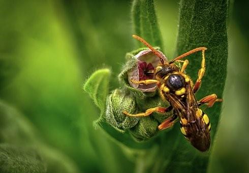 DIY Gardening – How To Keep Wasps Away