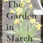 The Garden in March