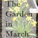 The Garden in March