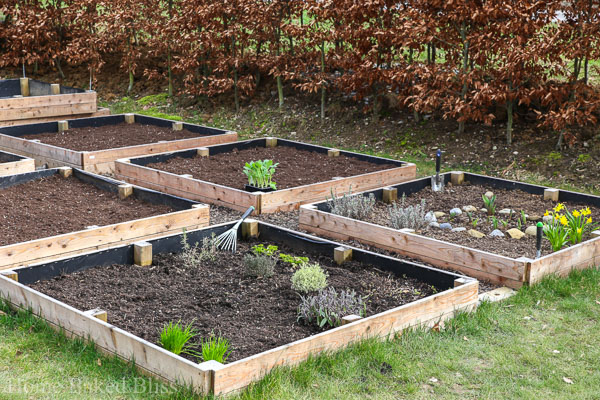 gardening, gardening tips, gardening march, what to plant in spring, how to grow vegetables