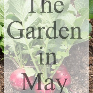 The Garden in May