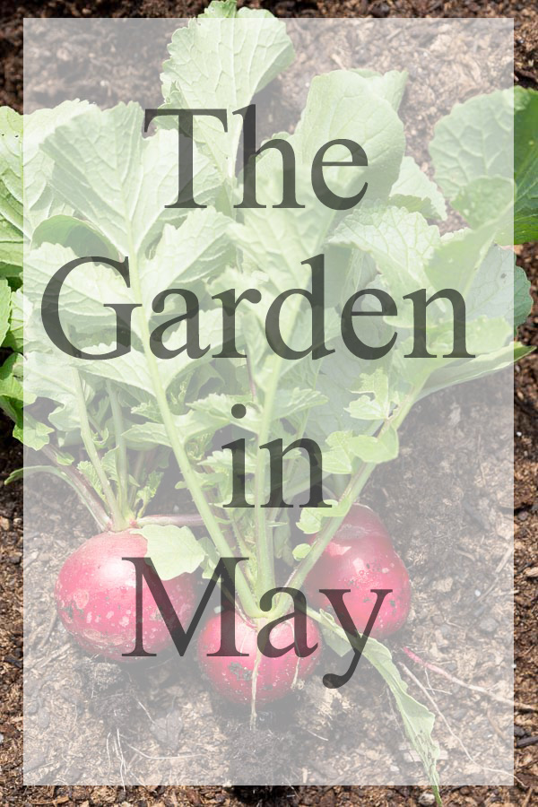 The Garden in May: Great seasonal gardening tips for vegetables, fruit and flowers