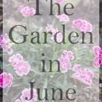 The Garden in June