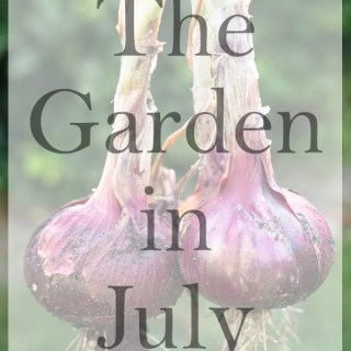 the garden in July title image