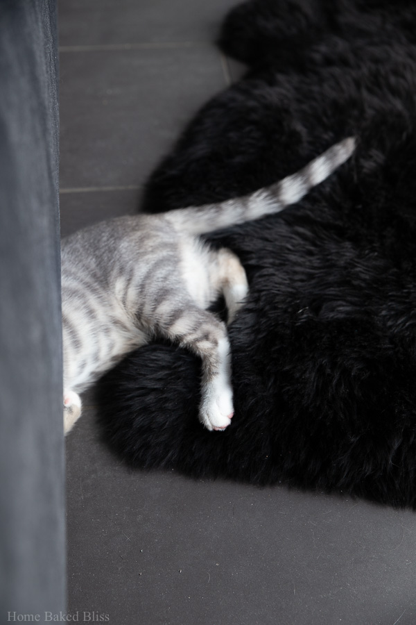 A silver kitten half hidden underneath a velvet bed.