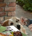 Bodza kutya