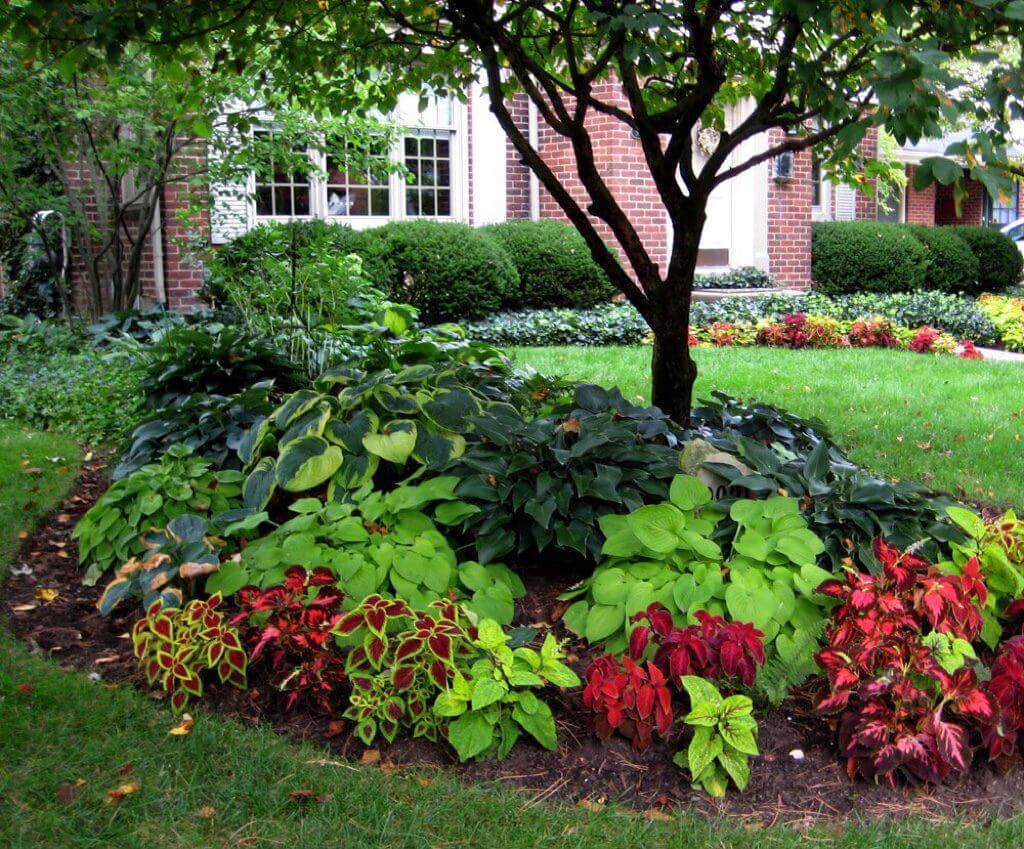 "Coleus and Hosta ""Flower"" Beds"