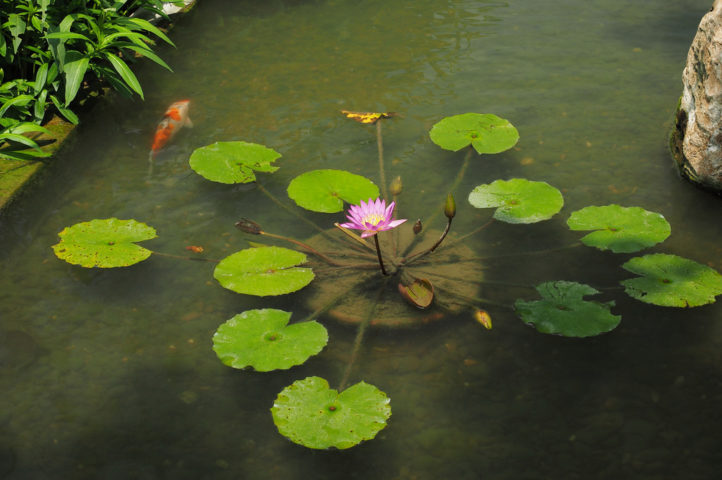What Plant Around Pond