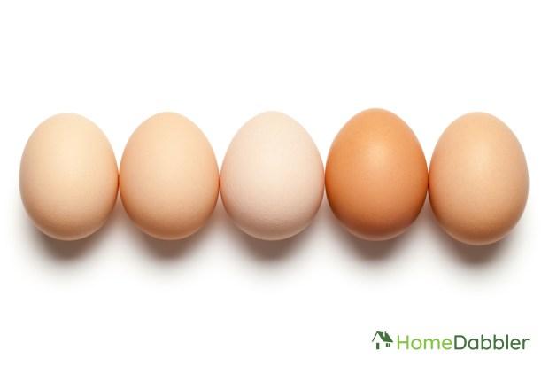 Eggs w logo-01