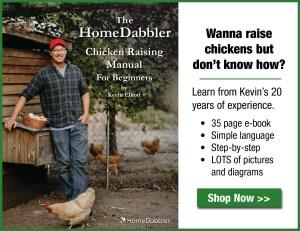 HomeDabbler Chicken Raising Manual for Beginners