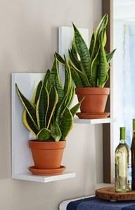 Inspiring Indoor Plans Garden Ideas To Makes Your Home More Cozier 13