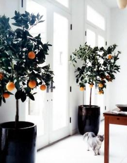 Inspiring Indoor Plans Garden Ideas To Makes Your Home More Cozier 53