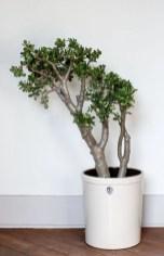 Inspiring Indoor Plans Garden Ideas To Makes Your Home More Cozier 59