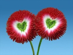 Amazing Outdoor Valentine Decoration Ideas 30