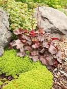 Beautiful Front Yard Rock Garden Design Ideas 38