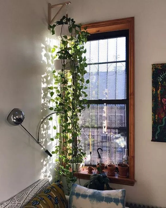 13 Inspiring Hanging Plants Ideas For Bathroom