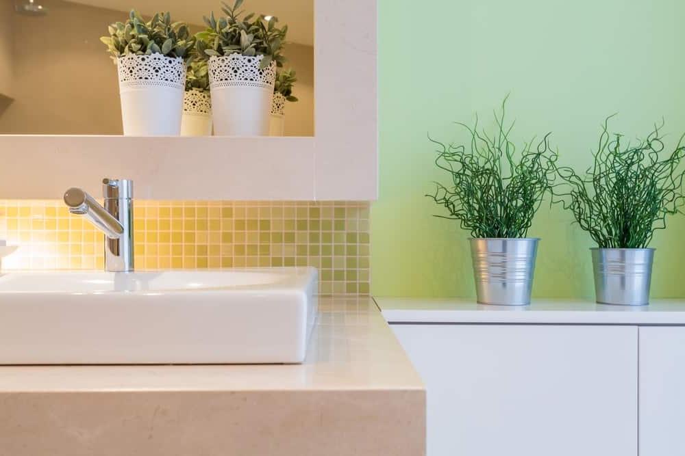 18 Ideal Indoor Plants For Your Bathroom