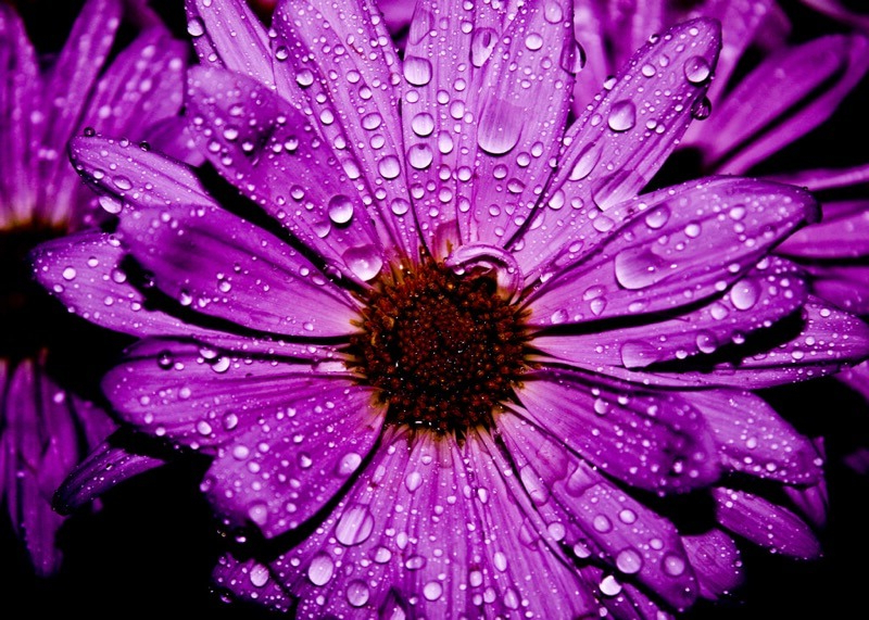 55 Beautiful Flower Pictures For Your Inspiration