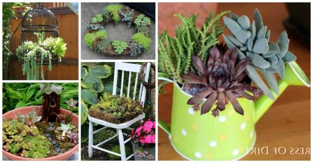9 Creative Ways To Grow Succulents Empress Of Dirt