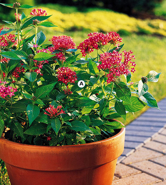 A Gallery Of Beautiful Container Garden Ideas Better